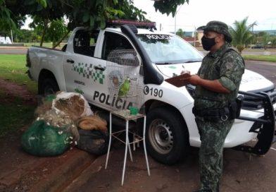Polícia Militar Ambiental realiza grande operação em Colômbia
